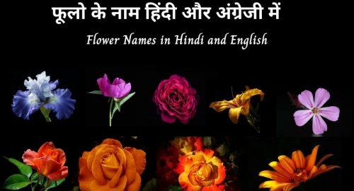 फूलो के नाम हिंदी और अंग्रेजी में