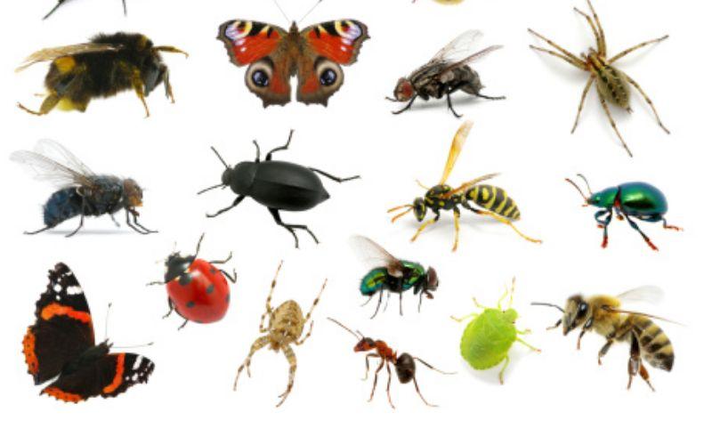 कीड़े